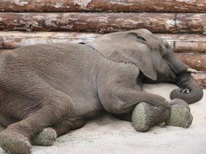 dinosaurs sleep