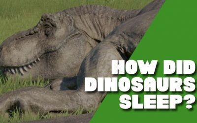 How Did Dinosaurs Sleep?