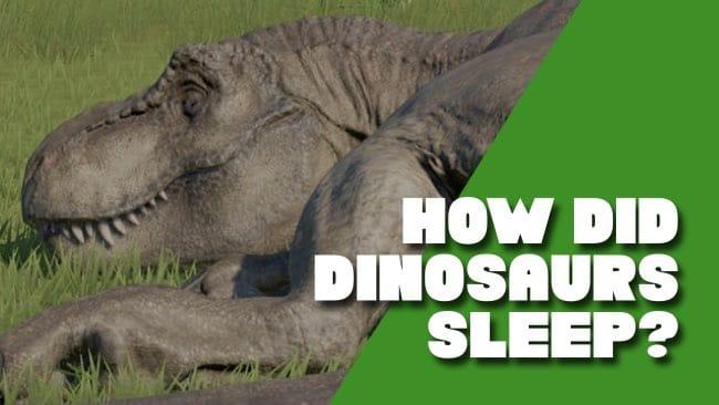 how did dinosuars sleep